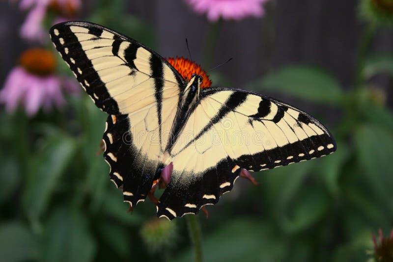 Download Vlinder stock afbeelding. Afbeelding bestaande uit geschakeerd - 275569