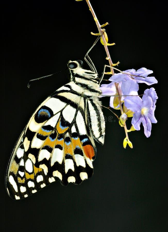 Download Vlinder stock foto. Afbeelding bestaande uit camping, vlinders - 293022