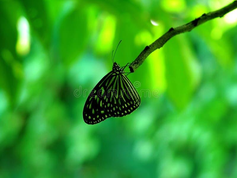 Download Vlinder stock foto. Afbeelding bestaande uit up, insect - 40188