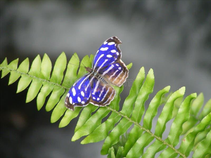 Vlinder royalty-vrije stock afbeelding