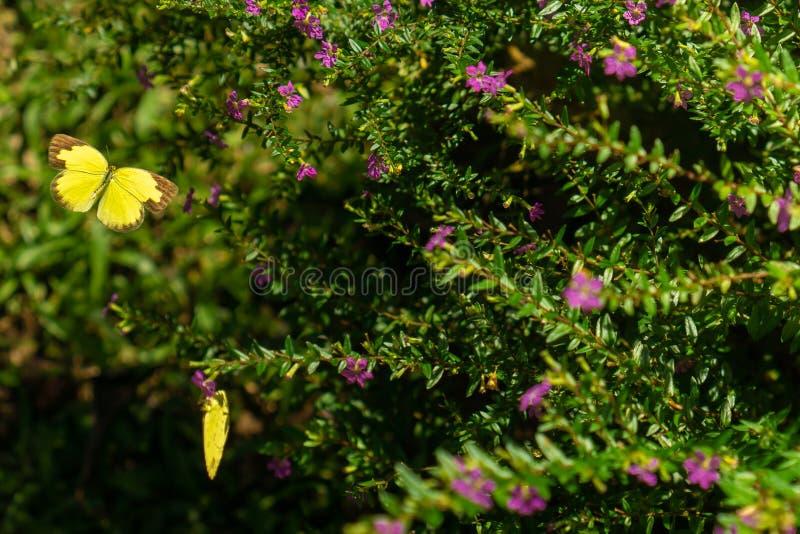 Vlinder in aard stock foto's