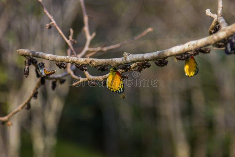 Vlinder in aard op boom royalty-vrije stock fotografie