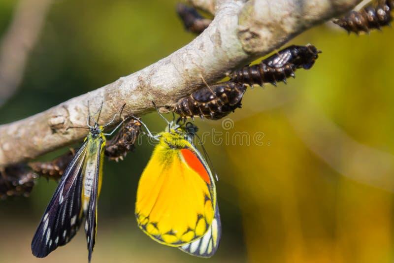 Vlinder in aard op boom stock foto