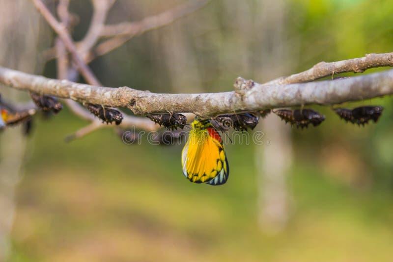 Vlinder in aard op boom stock afbeelding