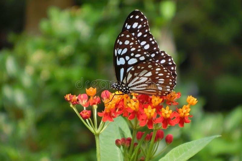 Vlinder bij Maonshan-het Park Hong Kong van het Land stock afbeeldingen