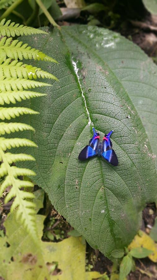 Vlinder blauw en zwart over groen blad royalty-vrije stock foto