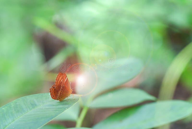 Vlinder Bruin op het blad royalty-vrije stock foto's