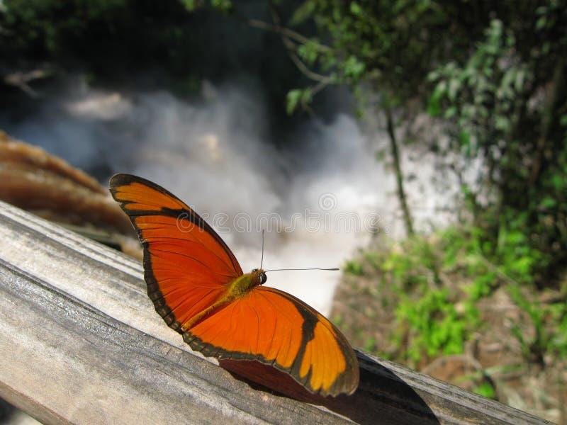 Vlinder, Dalingen Iguazu stock foto's