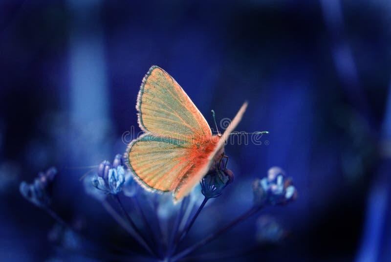 Vlinder in de nacht stock foto