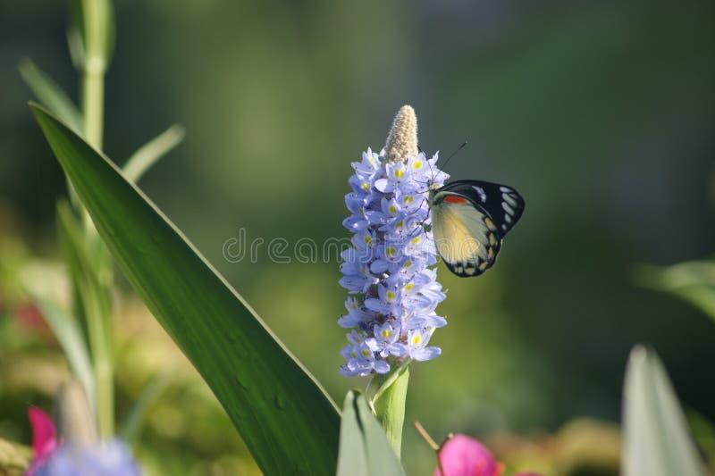 Vlinder in de ochtend royalty-vrije stock fotografie
