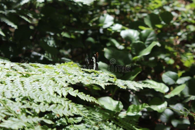 Vlinder die in de zon zonnebaden royalty-vrije stock foto