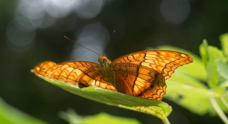 Vlinder die elegant op een blad situeren stock afbeelding