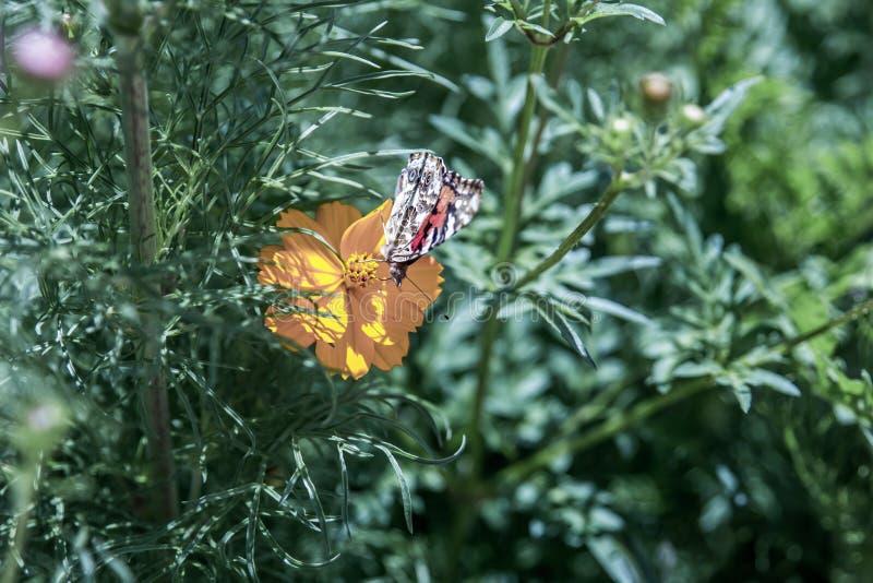 Vlinder die op één eenzame gele bloem rusten royalty-vrije stock afbeeldingen