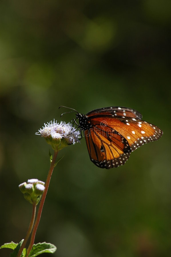 Vlinder die op wilde bloemverticaal wordt neergestreken stock foto