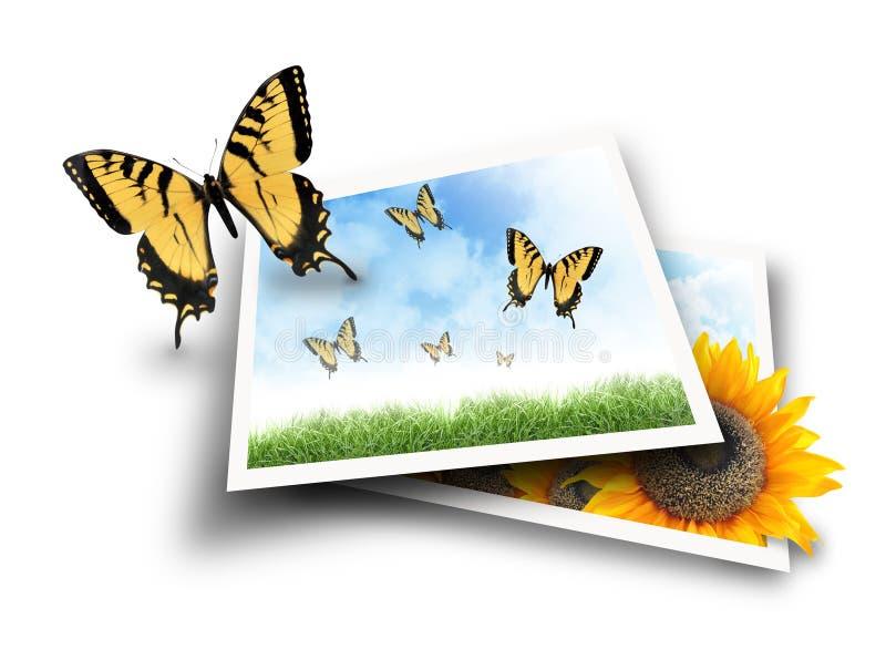 Vlinder die uit de Beelden van de Foto van de Aard vliegt vector illustratie