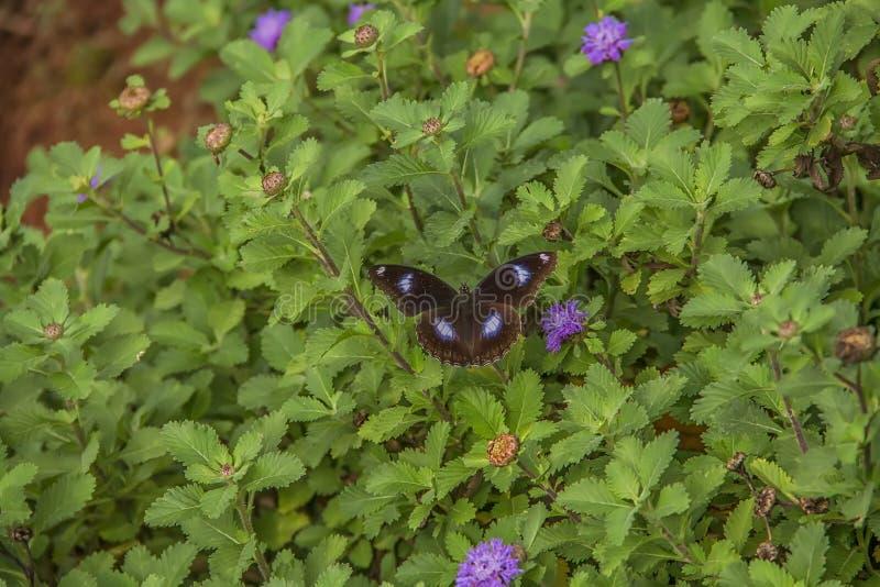 Vlinder die zijn bloem zoeken royalty-vrije stock foto's