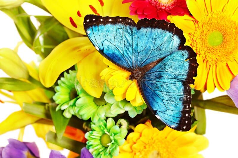 Vlinder en bloem. stock afbeeldingen