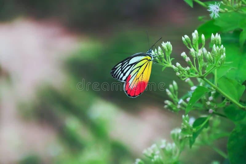 Vlinder en bloemen stock foto