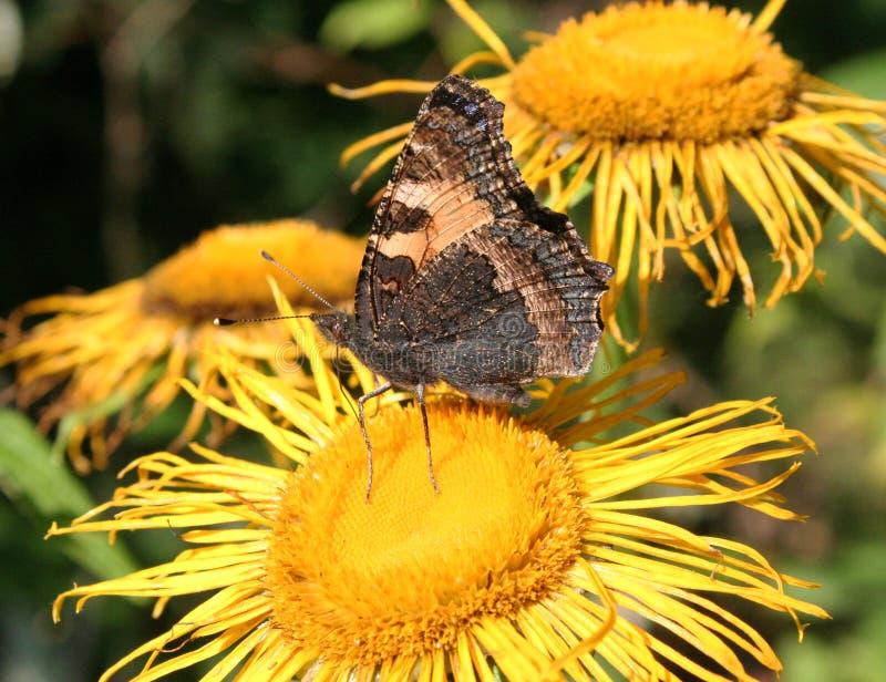 Vlinder en bosbloemen stock afbeeldingen