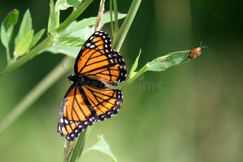 Vlinder en Insect royalty-vrije stock fotografie