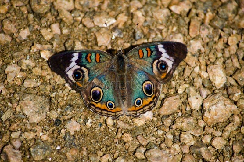 Vlinder en rotsen royalty-vrije stock afbeeldingen