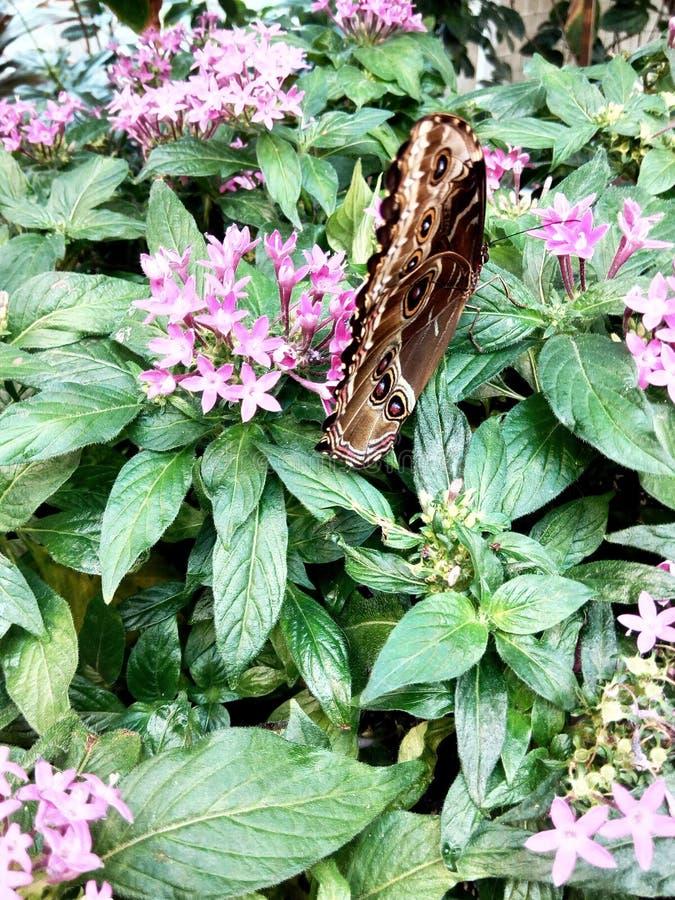 Vlinder en tuin royalty-vrije stock afbeelding