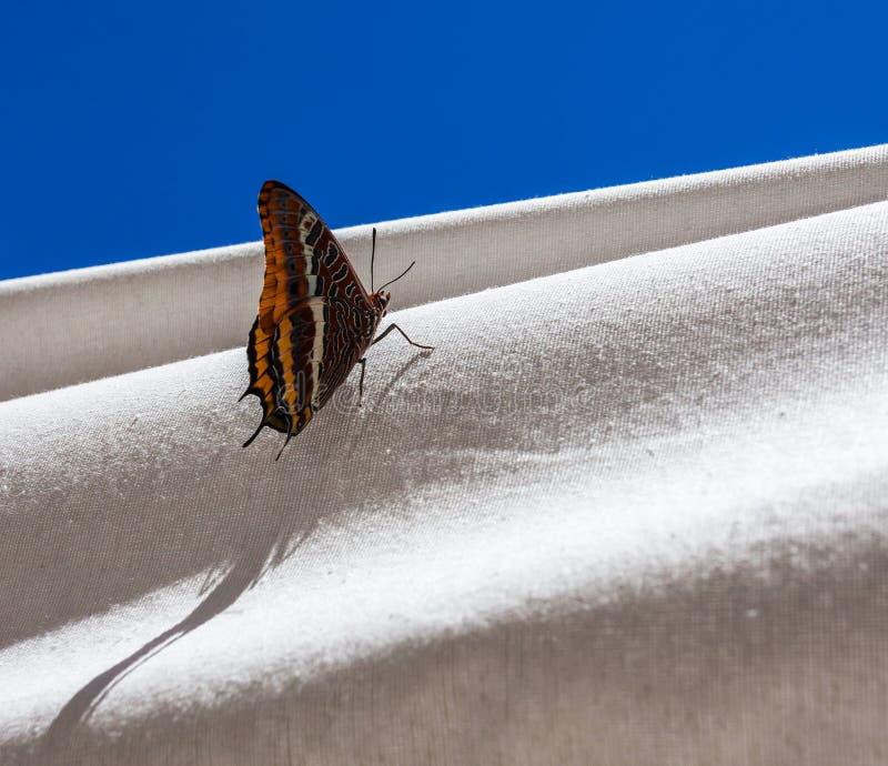Vlinder en witte gordijnen stock foto. Afbeelding bestaande uit ...