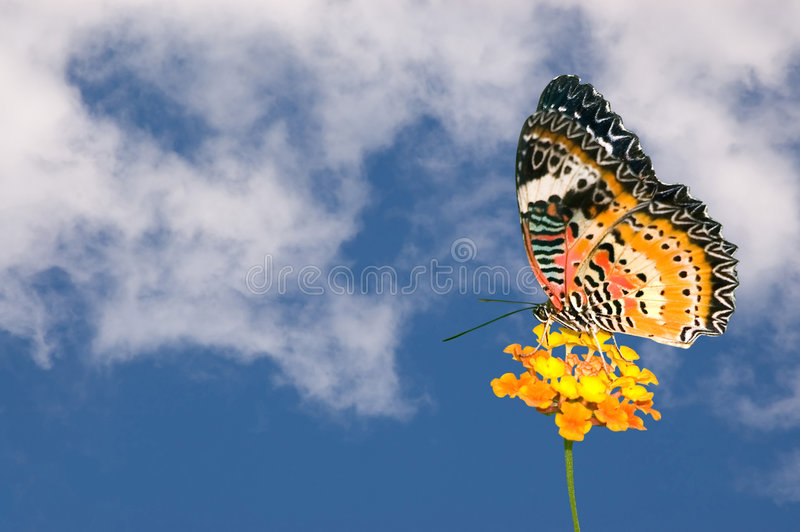 Vlinder en Wolken stock fotografie