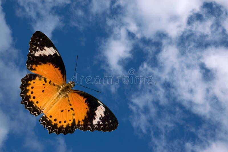 Vlinder en Wolken royalty-vrije stock afbeelding