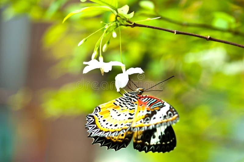 vlinder, geconcentreerd oog royalty-vrije stock foto's