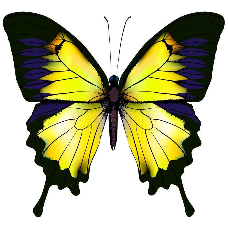 Vlinder Gele illustratie op witte achtergrond stock illustratie