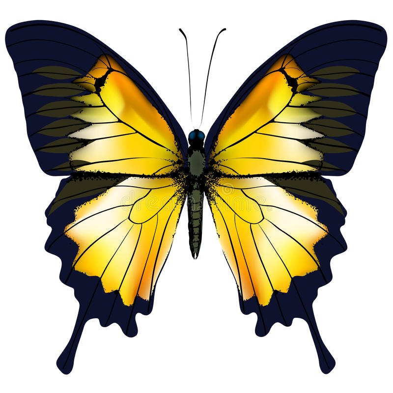 Vlinder Gele vlinder geïsoleerde illustratie op witte achtergrond vector illustratie