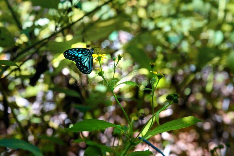 Vlinder in het Nationale Park van Tangkoko stock foto's