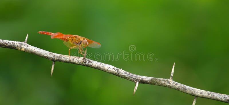 Vlinder, insecten, aard stock fotografie