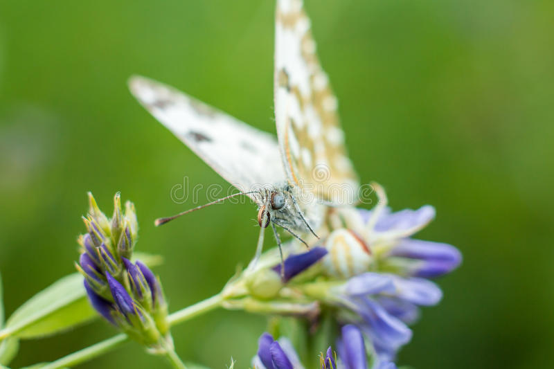Vlinder in installatie royalty-vrije stock afbeelding