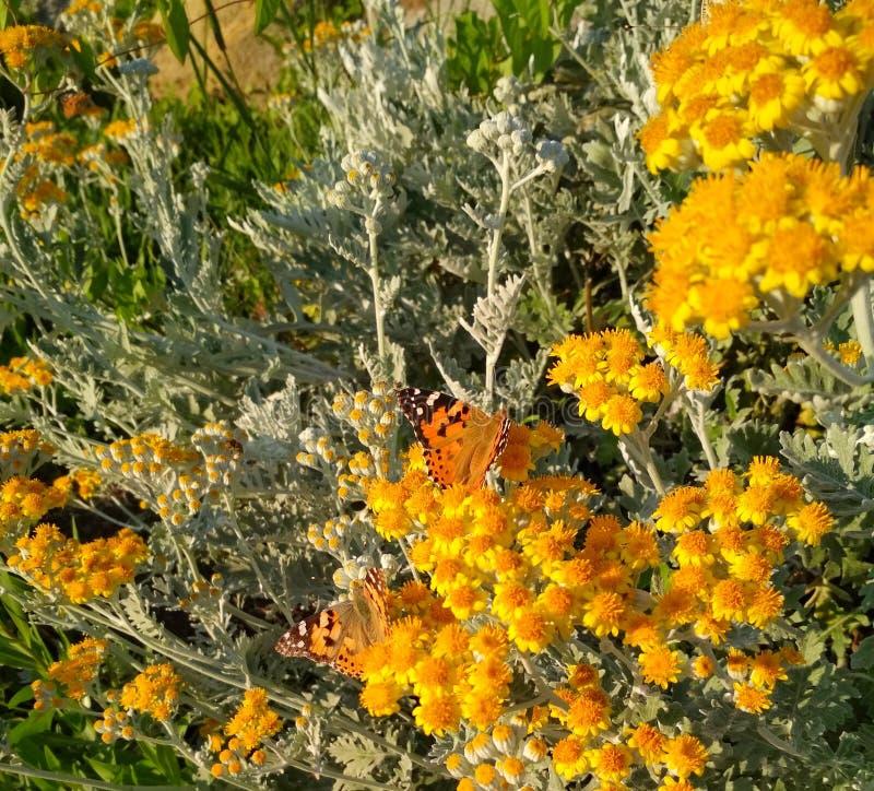 vlinder in kleine gele bloemen stock afbeelding