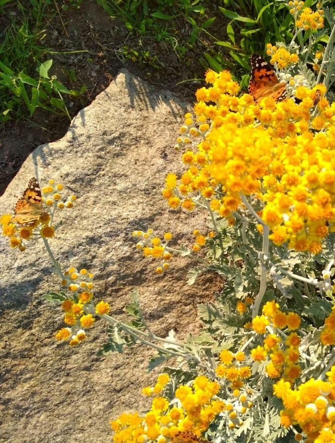 vlinder in kleine gele bloemen stock foto's