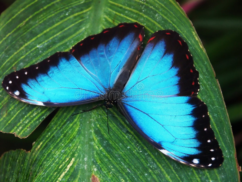 Vlinder macro#3 royalty-vrije stock fotografie