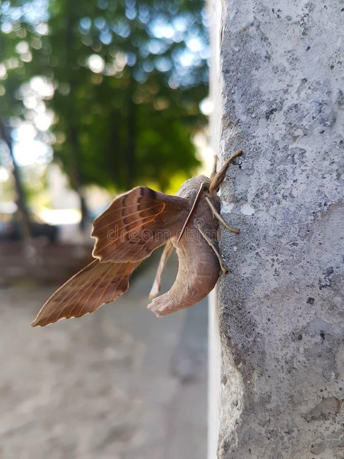 Vlinder in Macrofotografie Mooi insect royalty-vrije stock fotografie