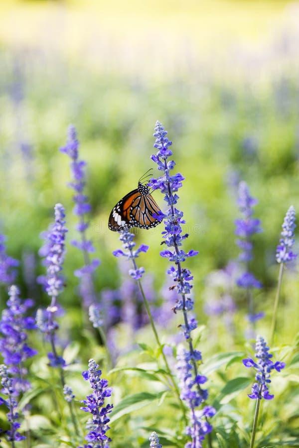 Vlinder met bloem royalty-vrije stock foto