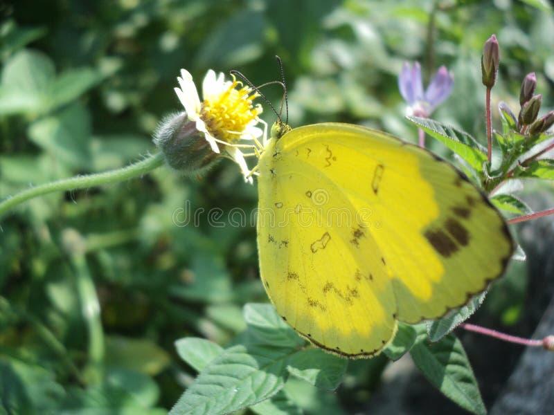Vlinder met mooie kleuren stock foto's