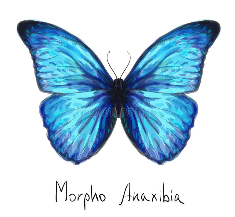 Vlinder Morpho Anaxibia. De imitatie van de waterverf. stock illustratie