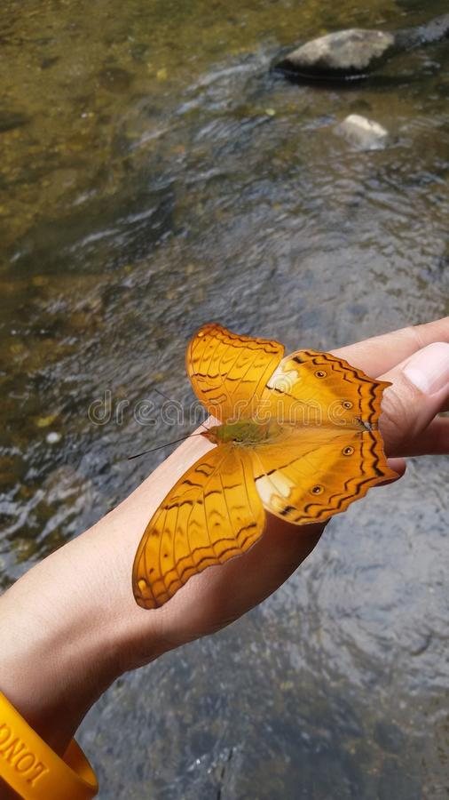 Vlinder @ Nationaal Park stock foto's