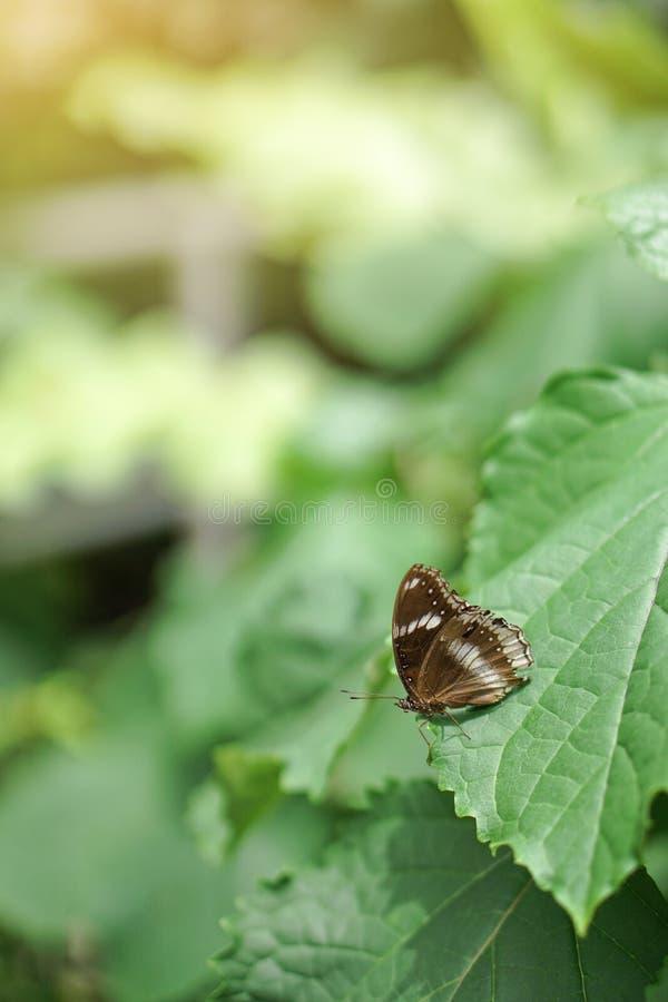Vlinder op Blad stock afbeelding