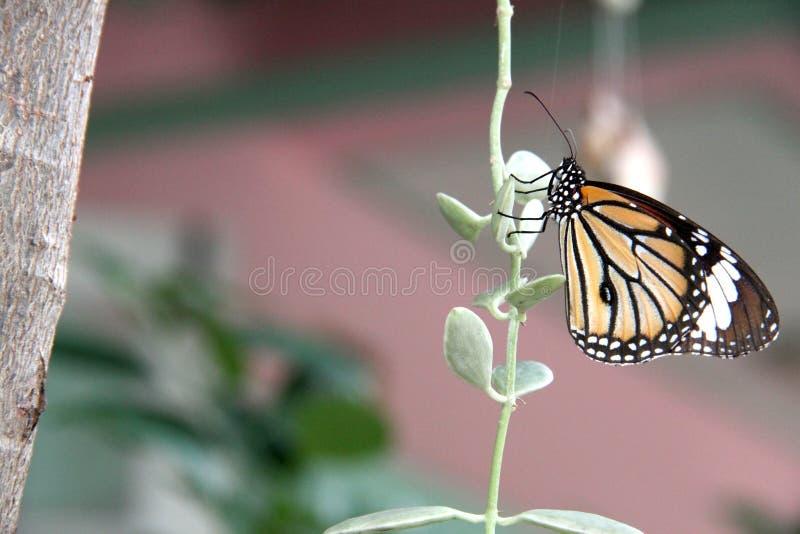 Vlinder op Bladeren stock afbeelding