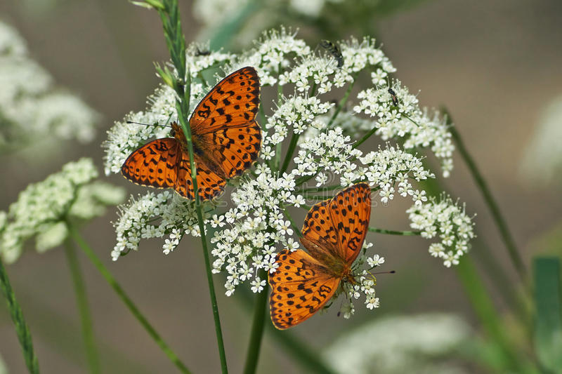Vlinder op bladeren van struiken royalty-vrije stock afbeelding