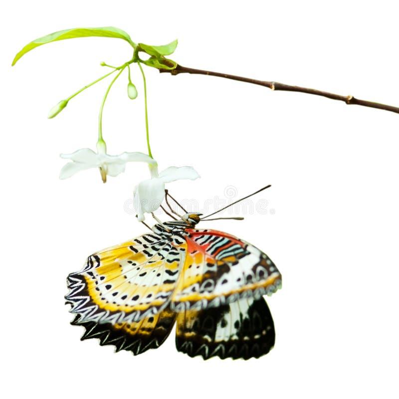 vlinder op bloem op wit wordt geïsoleerd dat stock afbeeldingen