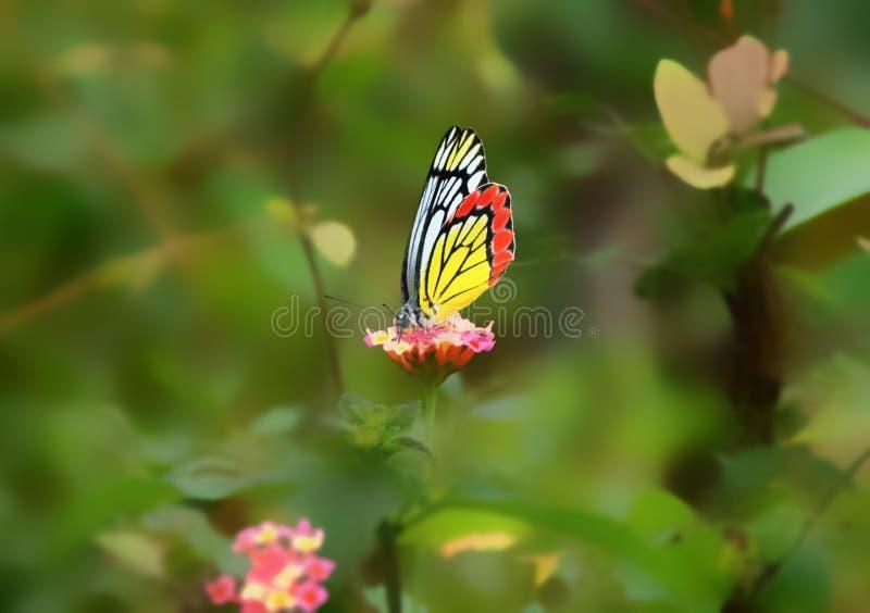 Vlinder op bloem stock afbeelding