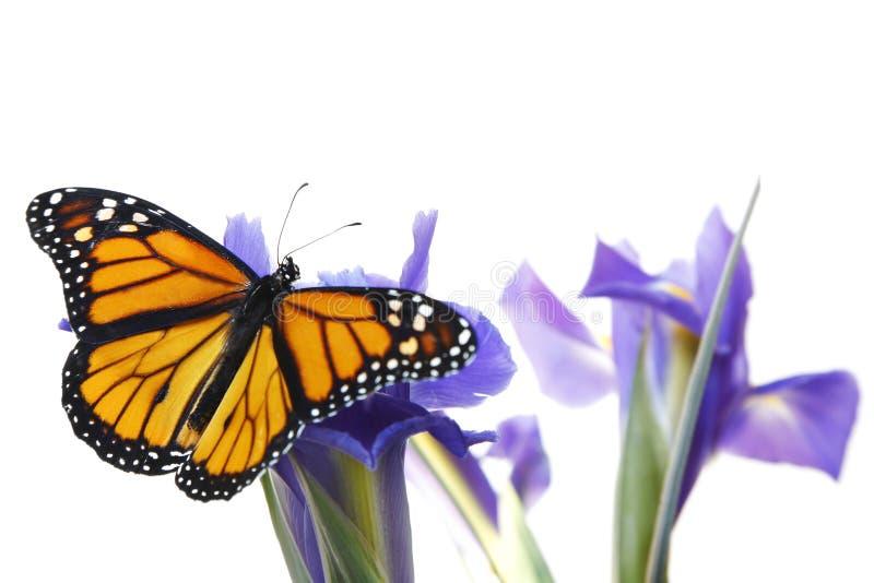 Vlinder op bloemen royalty-vrije stock afbeelding