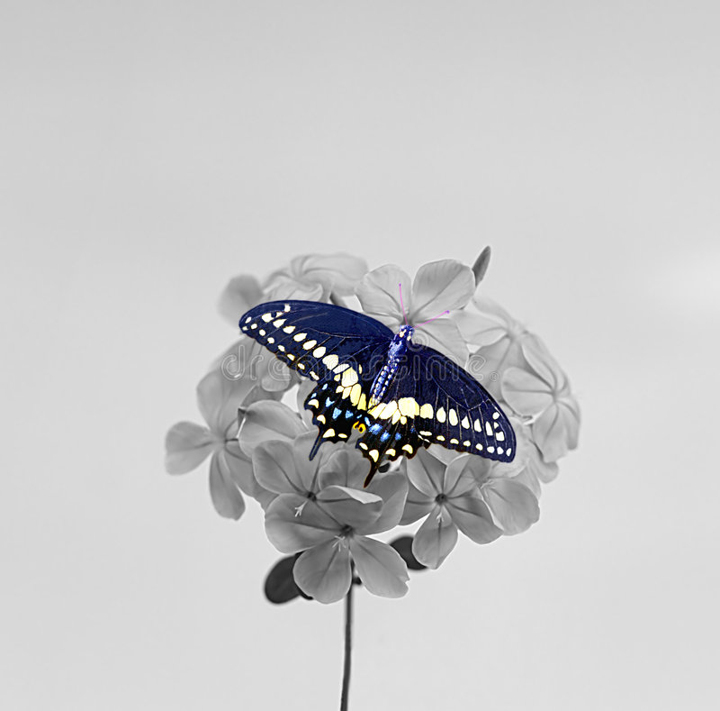 Vlinder Op Blosson Stock Fotografie